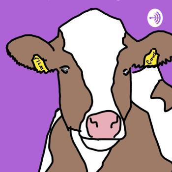 Film Cows