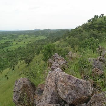 Extinctions in Near Time: Biodiversity Loss Since the Pleistocene
