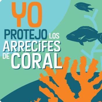 Lo Que Hay en los Corales del Este de Puerto Rico