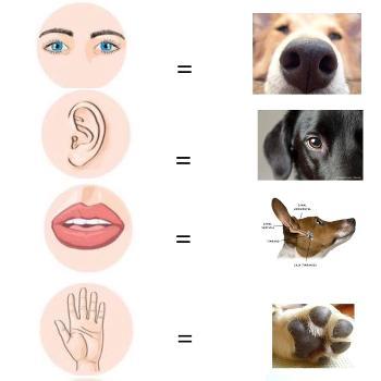 Perro estable - Humano consciente