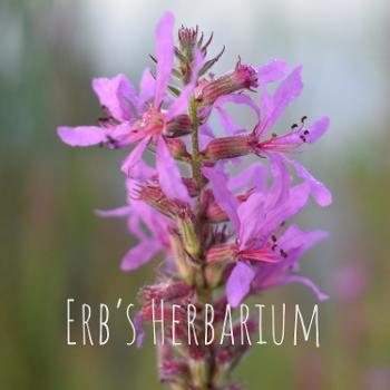 Erb's Herbarium