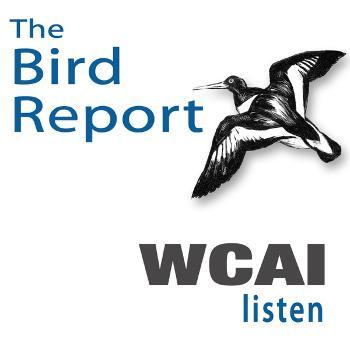 Weekly Bird Report