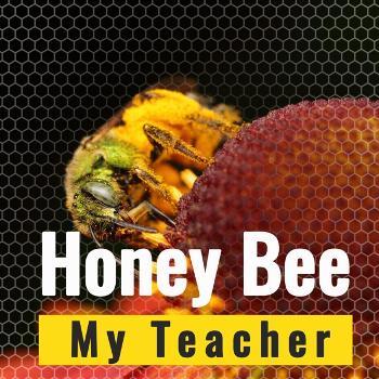 Honey Bee My Teacher