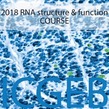 RNA structure and function 2018