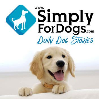 Simply For Dogs Franklin Medina discusses the latest dog tips, dog strategies, dog training, and everything related to dogs