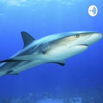 Protecting sharks
