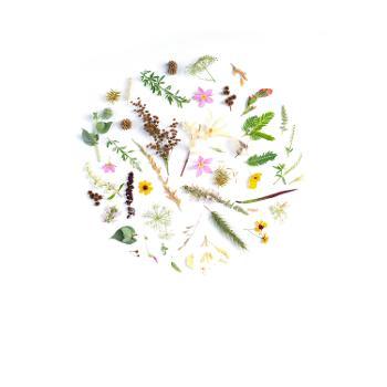Plant Based Alternatives