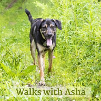 Walks with Asha