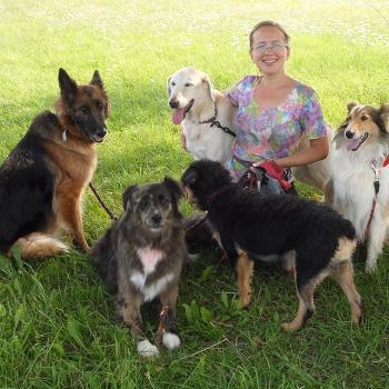 DoggyBoom Wychowanie i trening psów