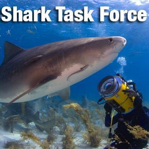 Shark Task Force